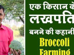 Broccoli-Farming-Jhabua-yt-thumb